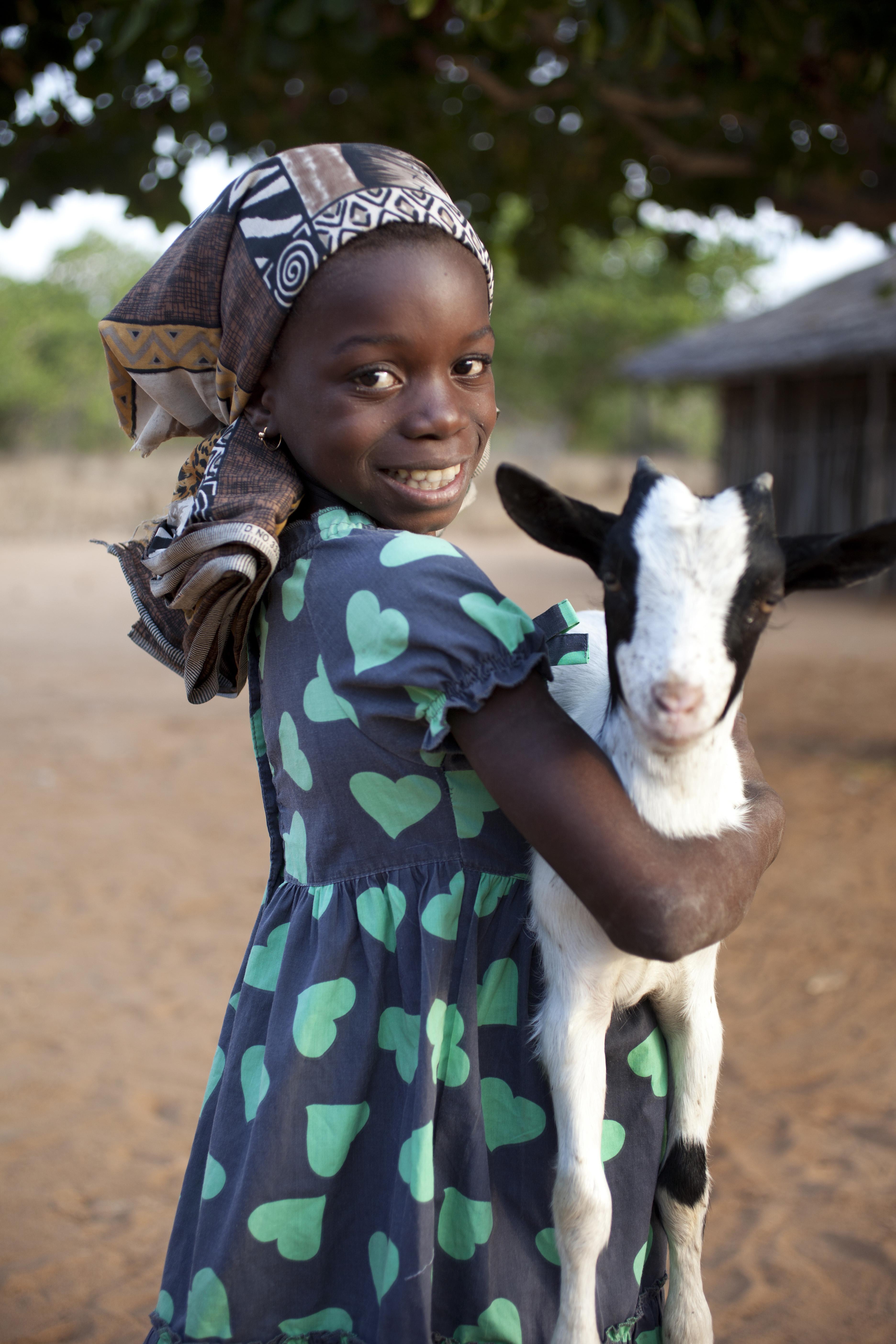 Goat - Product Image