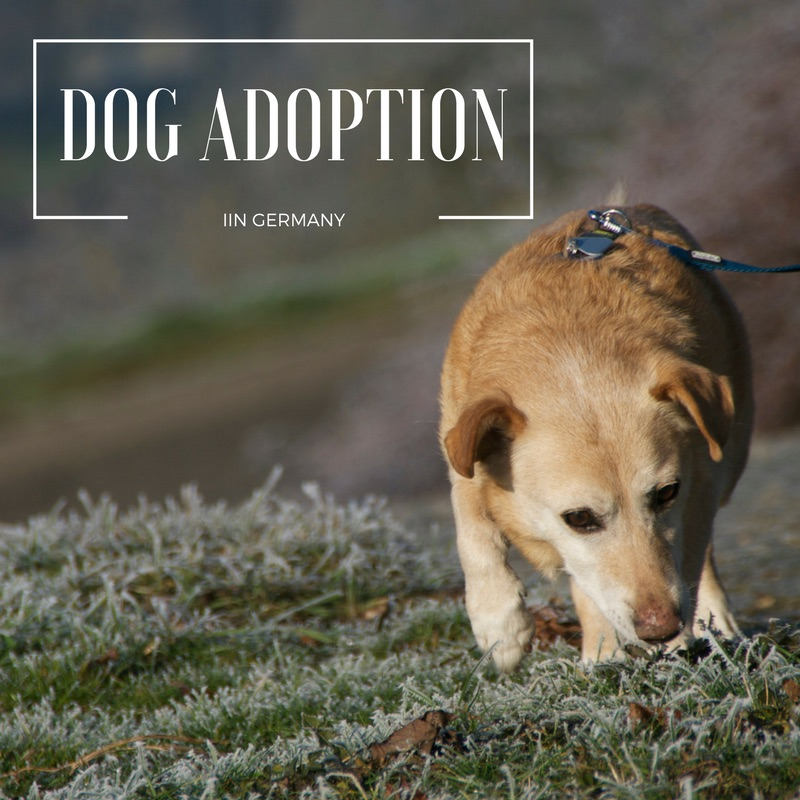 DOG ADOPTION graphic